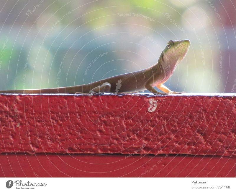 Curiosity Wildtier 1 Tier beobachten exotisch glänzend Neugier niedlich mehrfarbig Außenaufnahme Tag