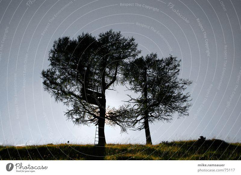 Zwei Bäume vor der Sonne Baum Hochsitz Laubbaum Wiese Hügel Leiter Schatten Silhouette