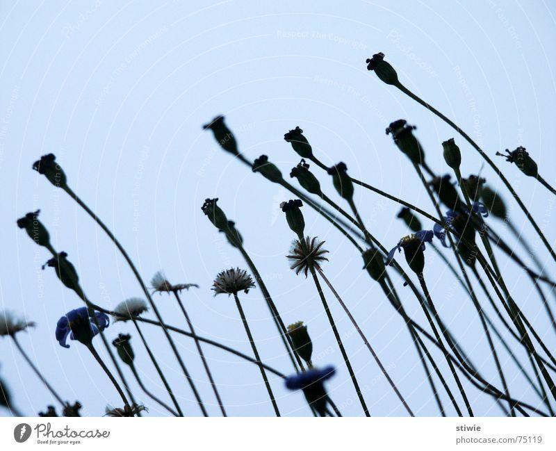 richtung: herbst Blume Pflanze Herbst Blüte Samen