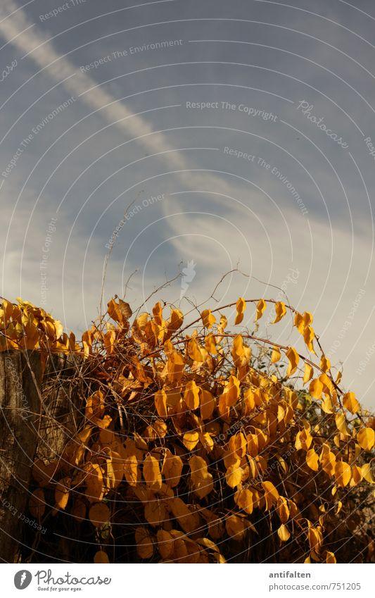 Herbst II Ausflug Sommer Garten Natur Pflanze Tier Himmel Wolken Sonne Wetter Schönes Wetter Baum Blatt Blüte Park hängen natürlich blau braun gelb gold orange