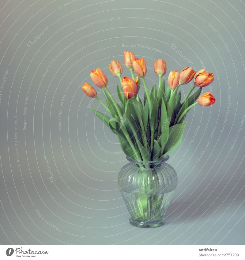 Tulpen gehen immer noch grün Wasser Pflanze Sommer Blume Blatt Frühling Innenarchitektur Blüte grau natürlich Wohnung orange Raum Häusliches Leben