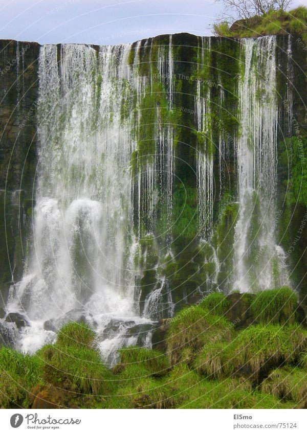 lebenselixir Wasser grün Leben Gras Wasserfall Brasilien Argentinien Südamerika Iguazu Fälle