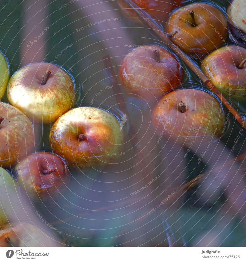 Weich gefallen. Wasser Herbst Gras See Frucht Apfel Teich mögen Apfelbaum herbstlich