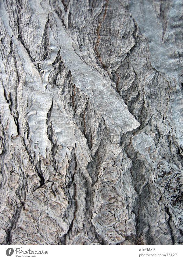 Alter Baum hat viele (Ge)schichten Natur alt Pflanze grau Linie Vulkan Baumrinde gezeichnet Vulkankrater