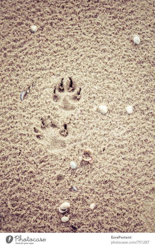 Strandspaziergang Erholung ruhig Ferien & Urlaub & Reisen Ausflug Sommer Sommerurlaub Meer Natur Sand Frühling Haustier Hund Fährte laufen natürlich braun gelb