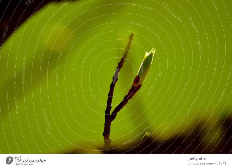 Wald Umwelt Natur Pflanze Frühling Baum Blatt Wachstum natürlich wild grün Blattknospe Farbfoto Außenaufnahme Tag Schwache Tiefenschärfe