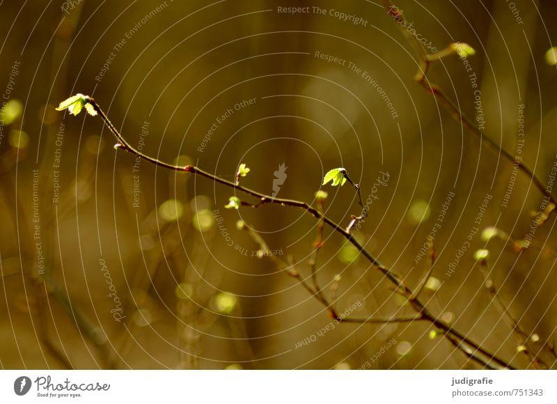 Zart Natur blau grün Pflanze Baum Blatt Wald Umwelt Wärme Leben Frühling natürlich Wachstum leuchten Sträucher Zweig
