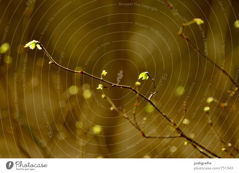Zart Umwelt Natur Pflanze Frühling Baum Sträucher Blatt Wald leuchten Wachstum natürlich Wärme blau grün Leben Zweig Farbfoto Außenaufnahme Tag