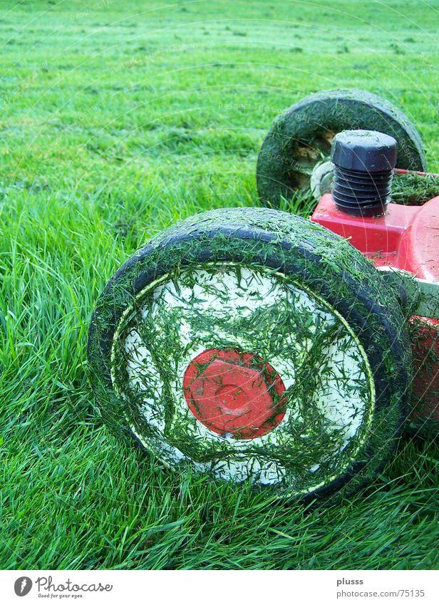 abgrasen Rasenmäher Gras Wiese grün rot Arbeit & Erwerbstätigkeit intensiv Halm fahren Fußballplatz saftig satt nass Ergebnis Reifen Motor geschnitten zupfen