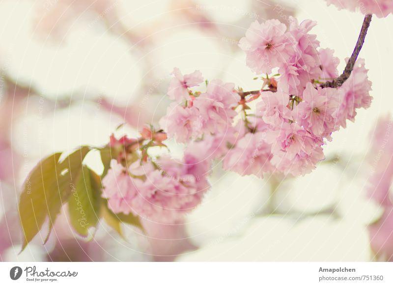 ::14-7:: Parfum Wellness Sinnesorgane Erholung Duft Ferien & Urlaub & Reisen Garten Umwelt Natur Landschaft Pflanze Tier Sonne Frühling Sommer Klima Baum Blume