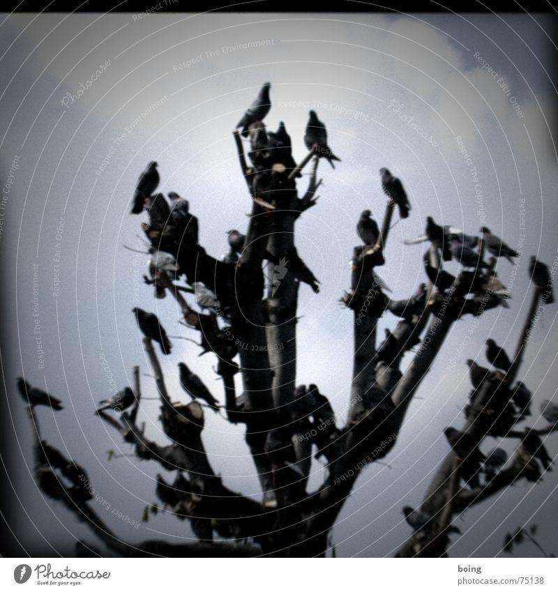 Bazooka Josef Baum Garten Vogel Park Tiergruppe Trauer Verzweiflung Taube Wien Vogelschwarm Zugvogel New York State kürzen Problemzone Burggarten Burgtheater