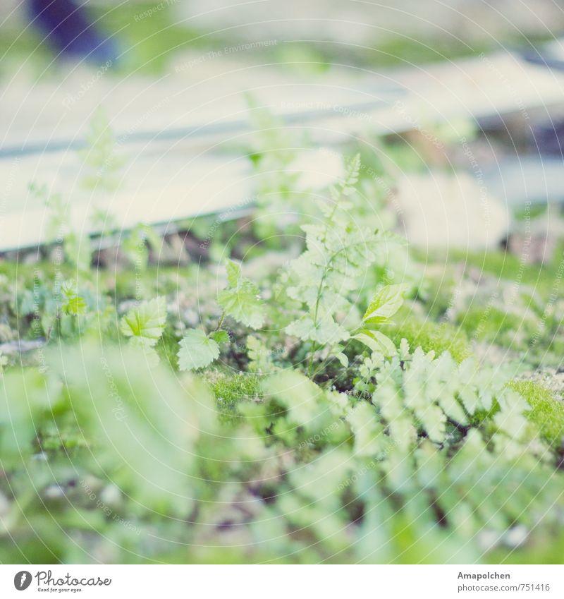 ::14-10:: Umwelt Natur Landschaft Pflanze Tier Klimawandel Sträucher Moos Grünpflanze Wildpflanze Ruine Wachstum verwildert Wildnis verfallen Einsamkeit