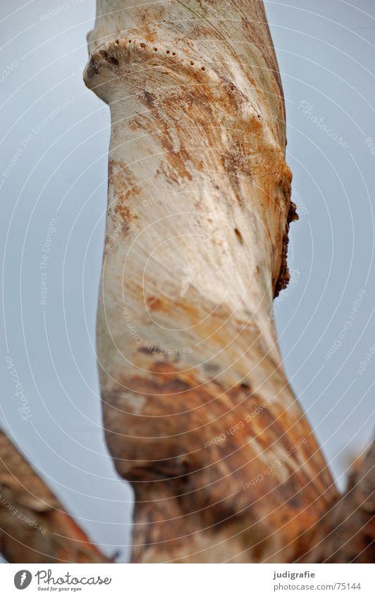 Verdreht Baum gedreht Windung Ecke Skulptur Holz Weststrand Ast Himmel drehen biegen Strukturen & Formen Glätte Tod Leben Natur