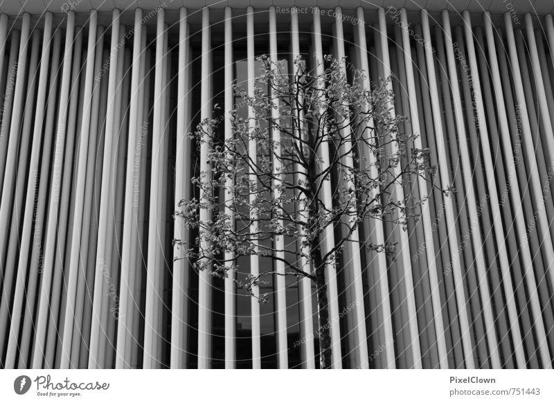 Aufforstung Ferien & Urlaub & Reisen weiß Pflanze Sommer Baum schwarz Wand Architektur Mauer Gebäude Stil grau Holz Stein Kunst Park