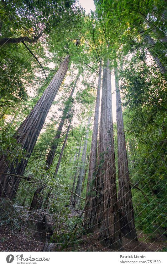 hoch hinaus Natur Ferien & Urlaub & Reisen alt Pflanze Sommer Baum Erholung Landschaft ruhig Ferne Wald Umwelt Freiheit Tourismus wandern