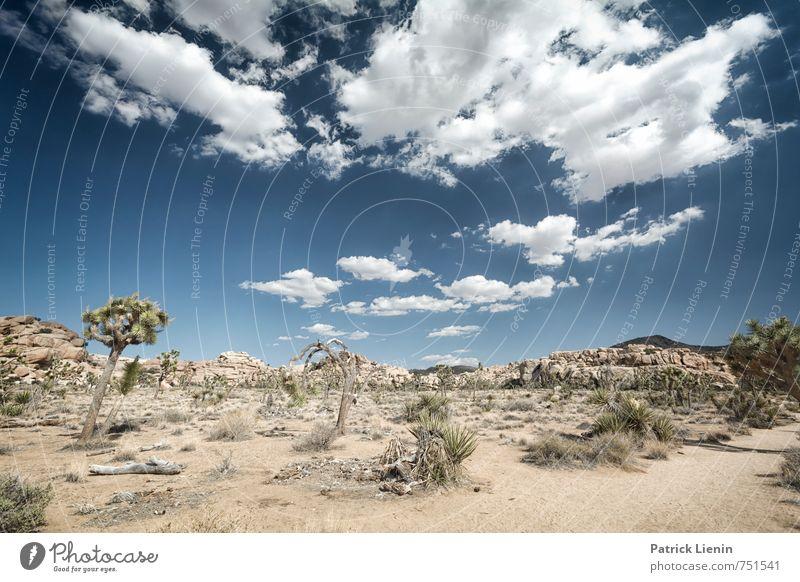 Wüstentag Himmel Natur Pflanze Sommer Erholung Landschaft Wolken ruhig Ferne Umwelt Freiheit Zufriedenheit Wetter Tourismus wandern Sträucher