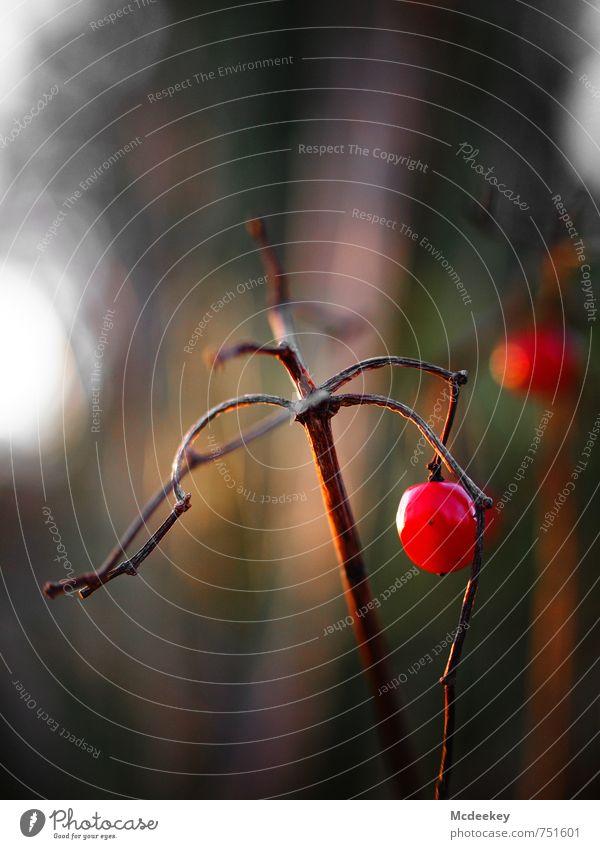 verlockendes Gift Natur grün weiß Pflanze Sommer Baum rot schwarz Umwelt Frühling Blüte grau natürlich braun rosa Park