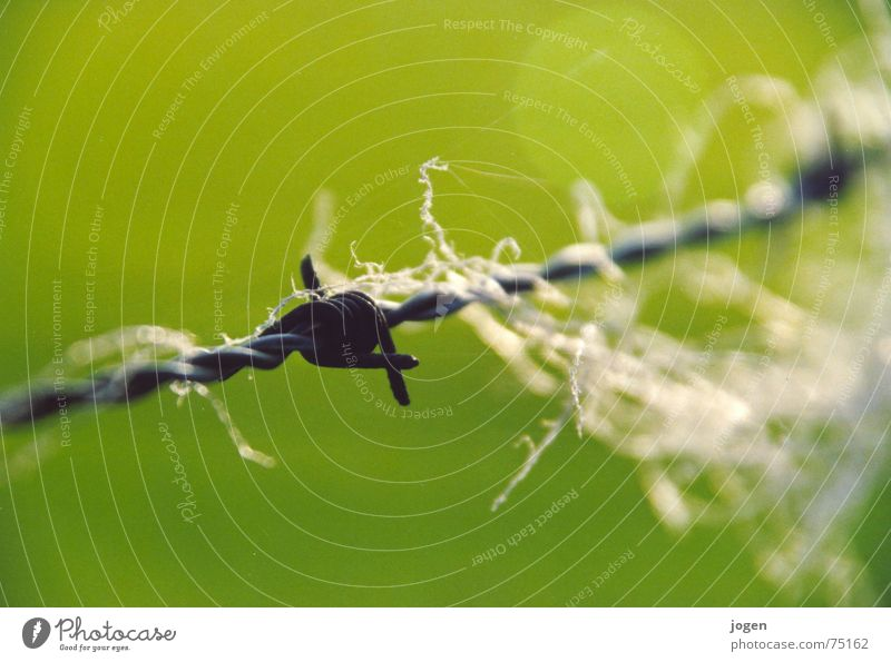 ...? Stacheldraht Zaun Wolle grün Draht Schaf Stacheldrahtzaun Makroaufnahme Nahaufnahme Säugetier Nähgarn Weide schaaf schaafe schaafsherde schafsherde Spitze