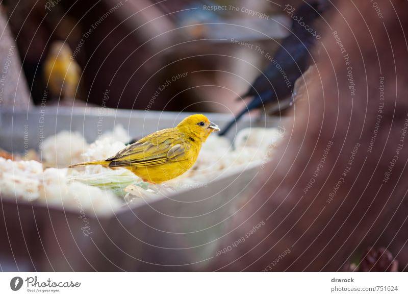 Tier gelb Essen Vogel Foodfotografie Wildtier Feder Flügel Zoo Dieb
