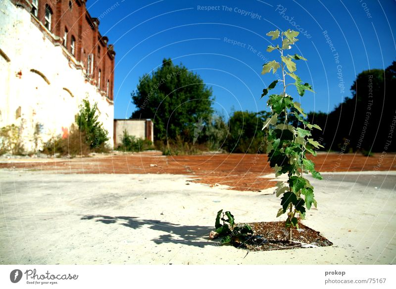 Kleiner Goliath Himmel weiß Baum grün blau Pflanze Blatt Stein Erde Mut Ruine Insolvenz Außenseiter baufällig