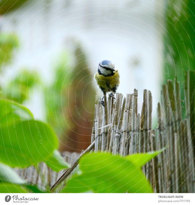 Zaungast Natur blau schön grün Blatt Tier gelb Umwelt Leben grau klein natürlich Garten fliegen Arbeit & Erwerbstätigkeit Sträucher
