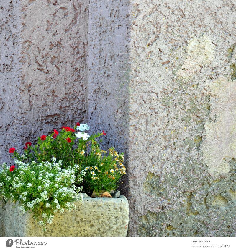 Nischendasein Dekoration & Verzierung Pflanze Blume Blüte Topfpflanze Gebäude Mauer Wand Fassade Behälter u. Gefäße Ecke Stein Beton Blühend alt mehrfarbig