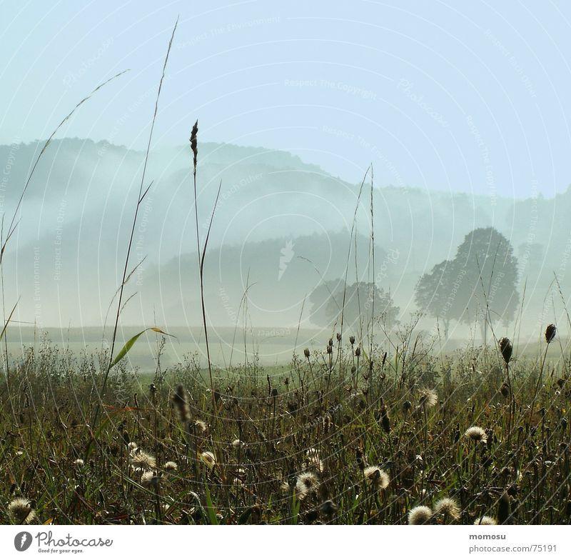 Nebelmorgen Himmel Baum Herbst Wiese Gras Berge u. Gebirge Stimmung
