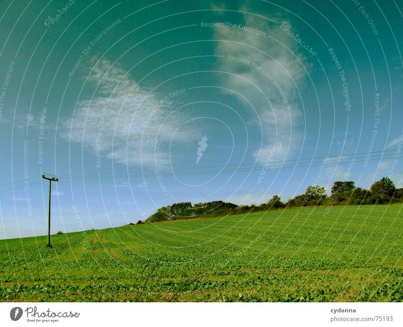 green field Feld Wolken Oberleitung Landwirtschaft gedeihen grün Hügel Stimmung Sommer Himmel Natur Landschaft Ackerbau Ernte Ferne Ausflug