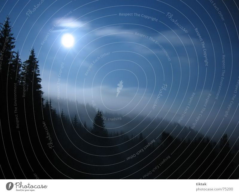 Dunkel war's der Mond schien helle... Baum blau Ferien & Urlaub & Reisen ruhig schwarz Wald dunkel Herbst Nebel Tourismus Romantik Tanne Mond Geister u. Gespenster Nacht unheimlich