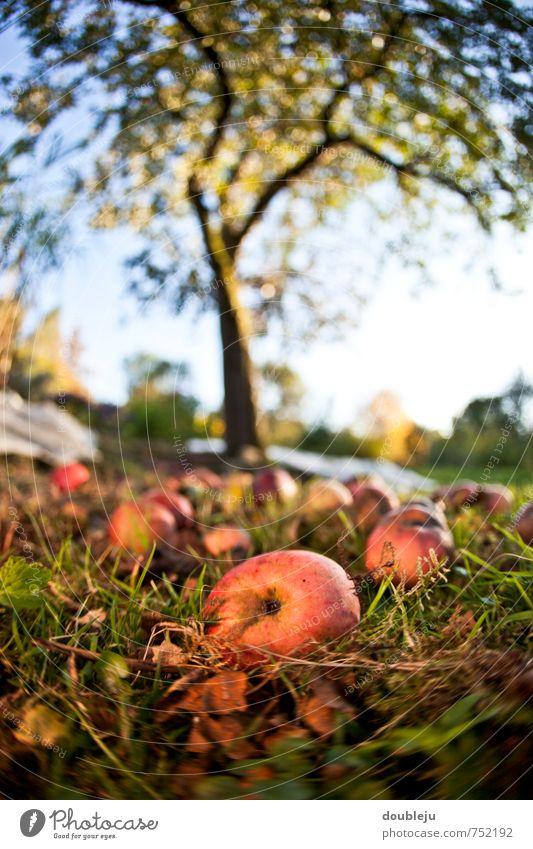 Erntedank Natur Pflanze Baum Herbst Gras Garten Erde Wachstum Nutzpflanze
