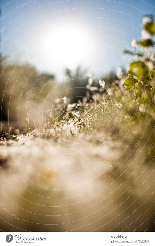 frühlingssonne Natur Landschaft Pflanze Sonne Sonnenlicht Frühling ästhetisch Farbfoto Außenaufnahme Nahaufnahme Menschenleer Textfreiraum unten Morgen Licht