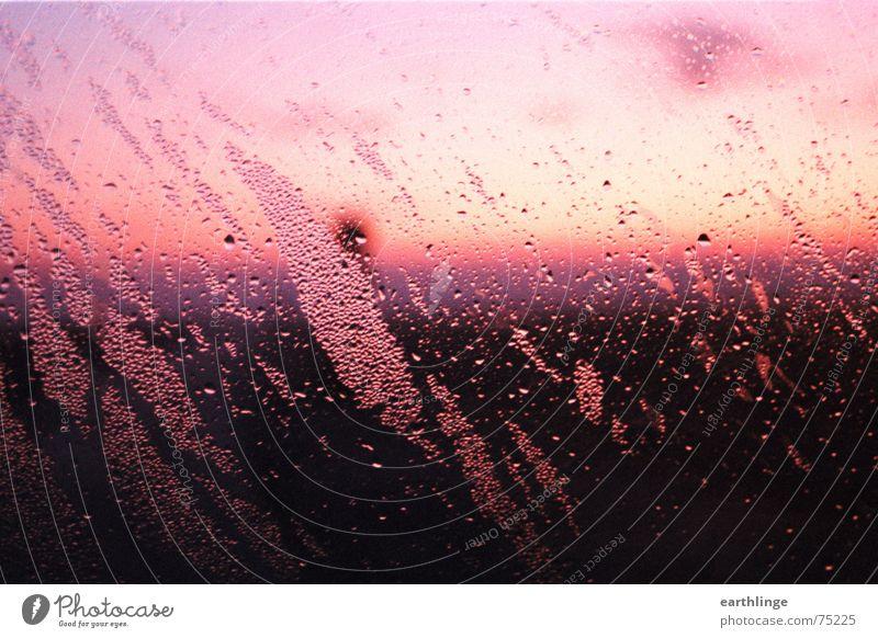 Rosa von kaumeinem Himmel blau Farbe kalt Fenster PKW rosa Glas Seil Horizont frisch analog feucht diagonal Autofenster Querformat
