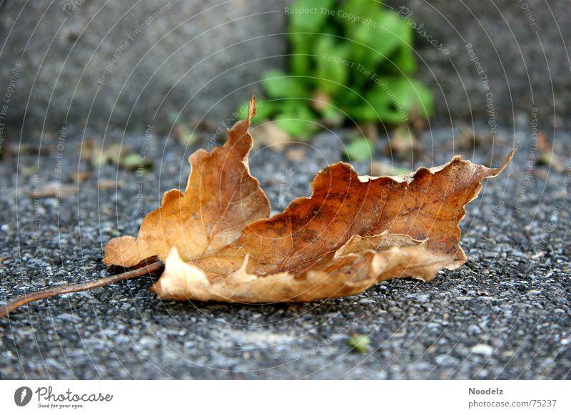 Otum grün Blatt Einsamkeit Straße kalt Herbst braun Bodenbelag Asphalt Stengel mögen