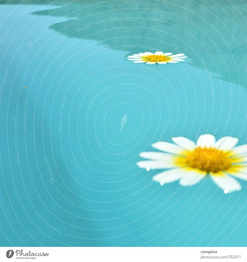 mach doch ein Q Ferien & Urlaub & Reisen Pflanze Sonne Erholung Blume ruhig gelb Sport Schwimmen & Baden Freiheit Gesundheit Wellen Tourismus Fitness Wellness