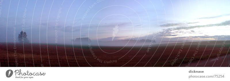 morning view Nebel Herbst Oktober Straßenrand Baum Wiese Panorama (Aussicht) Verhext mystisch Morgen aufm weg zur arbeit Himmel Sonne Landschaft Surrealismus