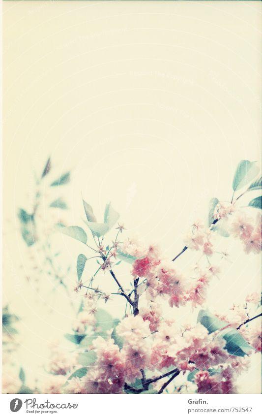 Ein Strauß Frühling Umwelt Natur Pflanze Baum Blüte Blühend Duft verblüht Wachstum Kitsch natürlich gelb grün rosa Romantik schön Idylle Surrealismus