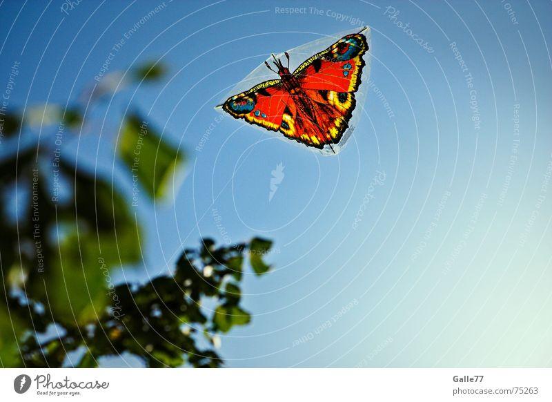 feel free Drache Sommer Schmetterling Sonne Drachenfliegen Himmel frei Freiheit