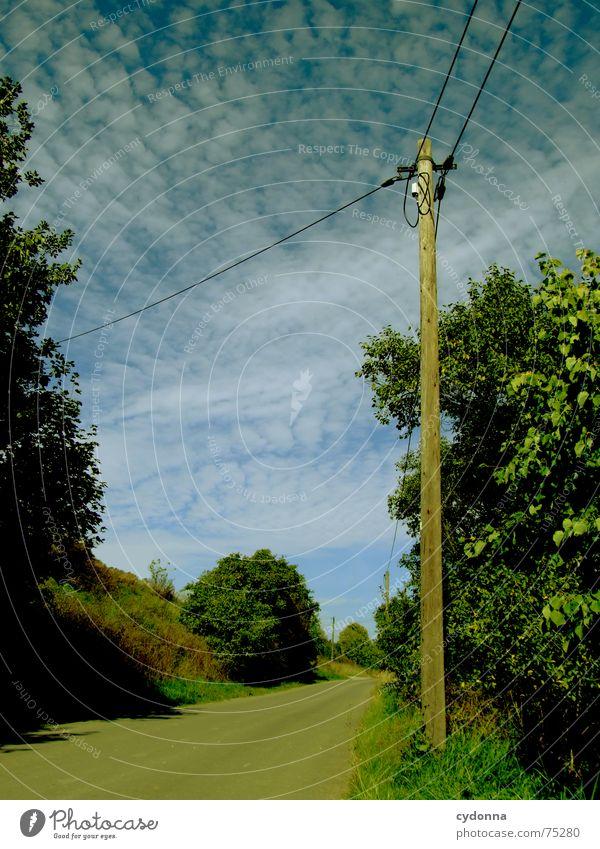 Der Weg ist das Ziel Oberleitung Elektrizität Aktion Baum grün Altokumulus floccus Verkehrswege Sommer Strommast weiterleitung Straße Wege & Pfade Ausflug Natur