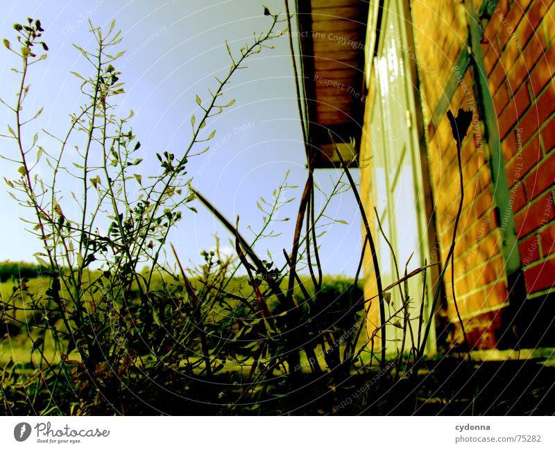 Am Bahnhof Gebäude Unschärfe Froschperspektive Pflanze Backstein Mauer grün Ankunft stilllegen schäbig vernachlässigen Architektur Detailaufnahme Stein