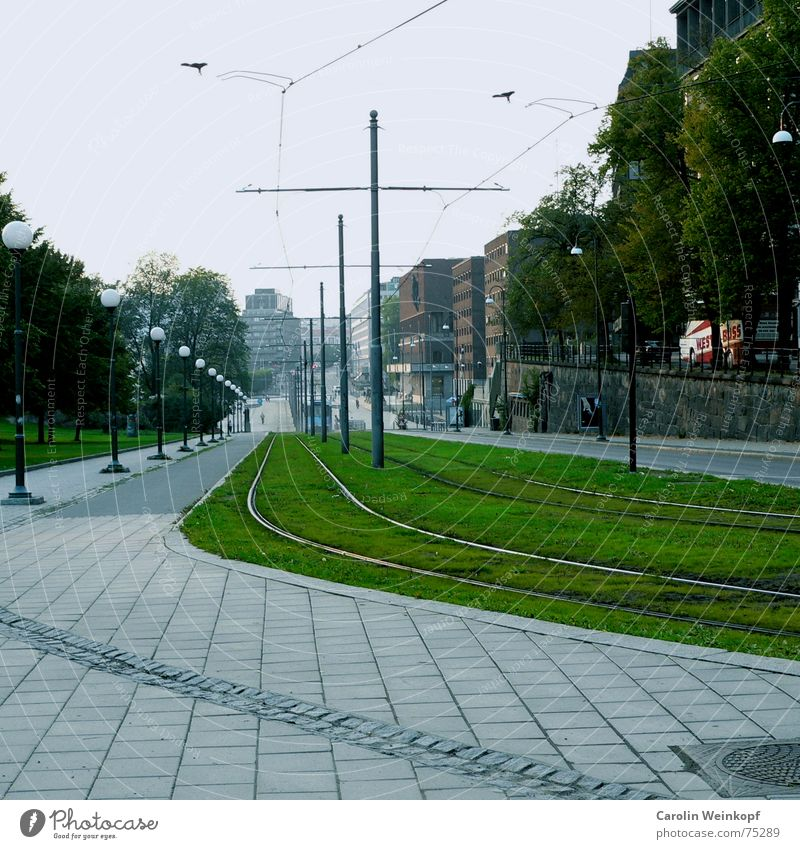 Es geht bergab. Baum Stadt Haus Straße Gras Stein Rasen Gleise Laterne Bürgersteig abwärts Straßenbahn Norwegen September Fluchtpunkt Oslo