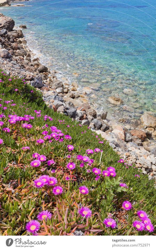 SPRING Natur Ferien & Urlaub & Reisen Wasser Sommer Meer Erholung Blume Landschaft ruhig Strand Frühling Küste Reisefotografie Blüte natürlich Felsen