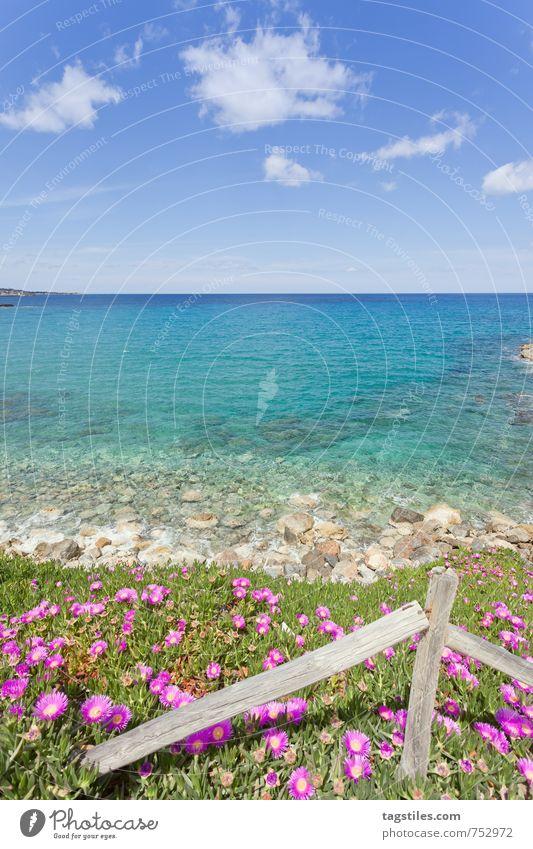 KRETAS KÜSTE Natur Ferien & Urlaub & Reisen Wasser Sommer Meer Erholung Blume Landschaft ruhig Strand Frühling Küste Reisefotografie Blüte natürlich Idylle