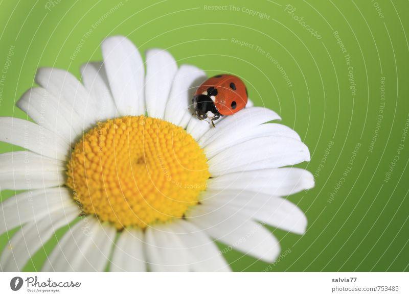 Frühlingsgefühle Natur grün weiß Pflanze Sommer Blume ruhig Tier gelb Wiese Blüte klein Glück Garten Geburtstag