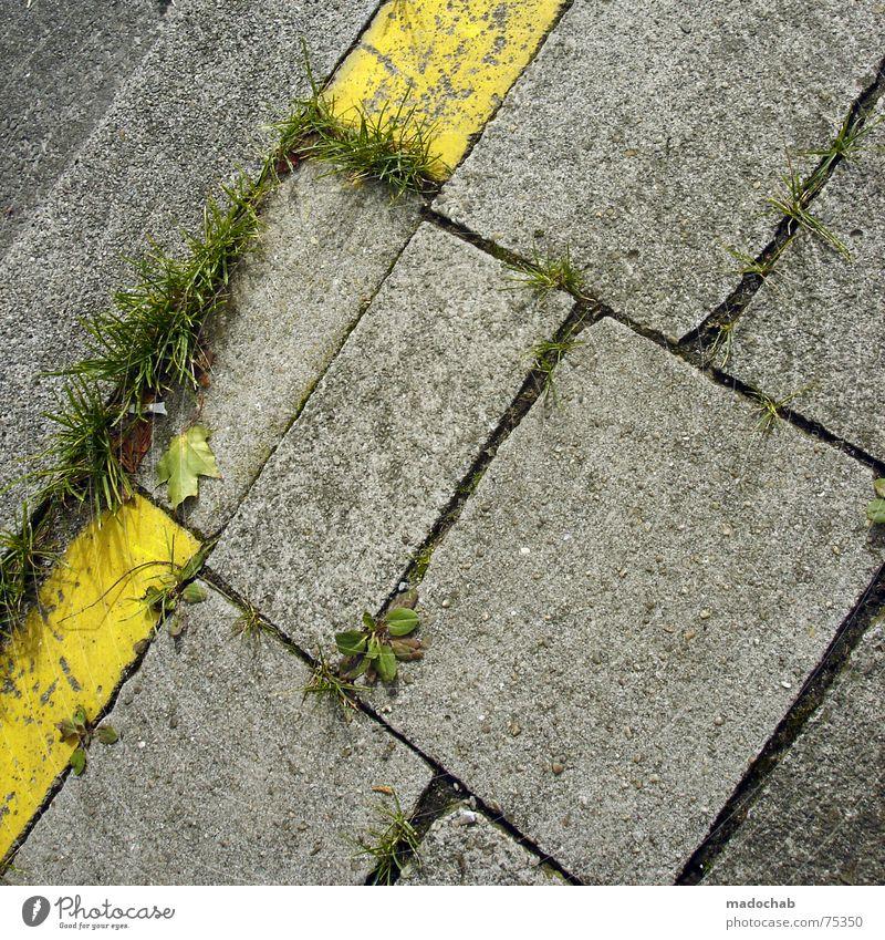 GELB Stadt Asphalt grau unten Fußgänger Verkehr trist Muster Hintergrundbild Strukturen & Formen Quadrat graphisch weiß gelb Gras Wiese Natur grün Leben