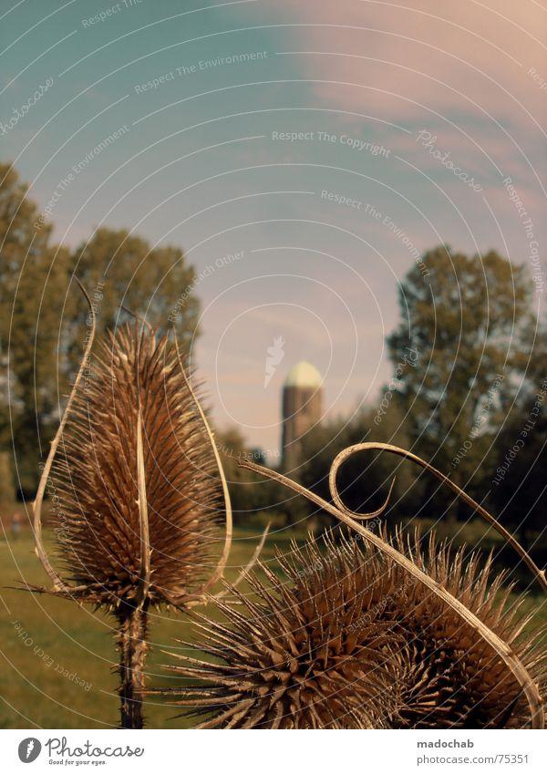 DO THE CARLITOS Himmel Natur Pflanze blau schön Sommer Baum Wolken Gefühle Herbst Gebäude Freiheit fliegen oben rosa Wetter