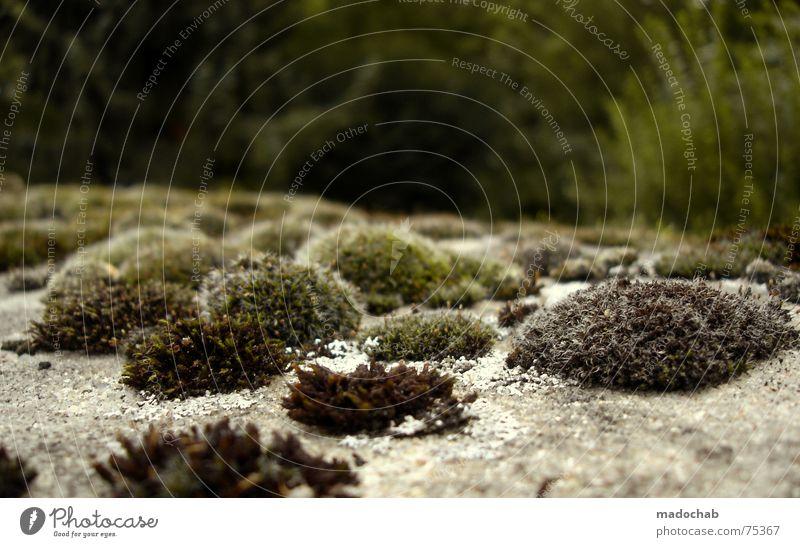 BILLIGE KOPIE Moos Pflanze grün Natur Schönes Wetter Vergänglichkeit Friedhof Wachstum Gefühle Pilz cemetery graveyard bothanik moss mushroom kenn mich nich aus