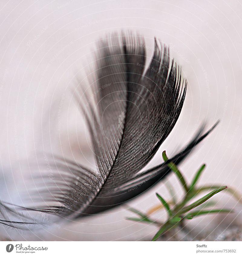 federleicht und sanft gelandet Feder Vogelfeder Leichtigkeit schwerelos gewichtslos hauchzart schwebend schwarze Feder filigran zerzaust beige luftig fein