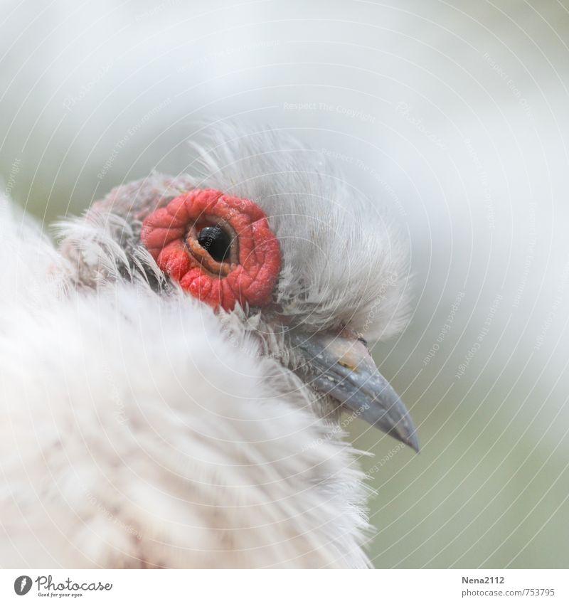 Flauschig Natur Tier Vogel Tiergesicht 1 klein weiß Tierjunges Küken Auge Schnabel Feder weich zerbrechlich Farbfoto Nahaufnahme Detailaufnahme Menschenleer
