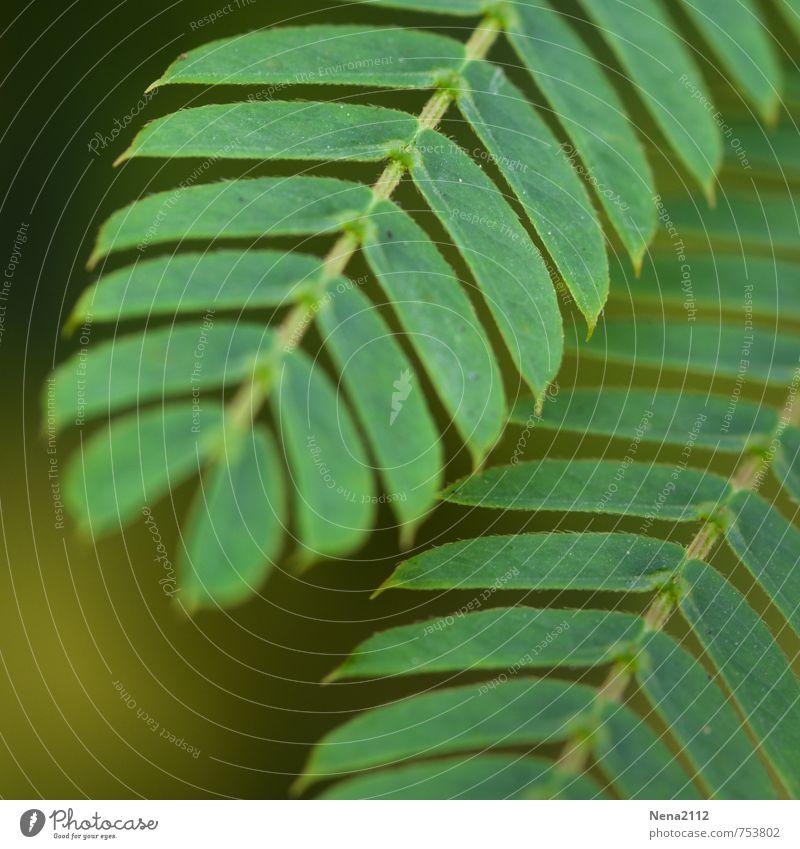 Grünzeug Umwelt Natur Pflanze Sträucher Blatt Grünpflanze Wildpflanze Garten Park Wiese Wald grün diagonal Symmetrie Farbfoto Außenaufnahme Nahaufnahme