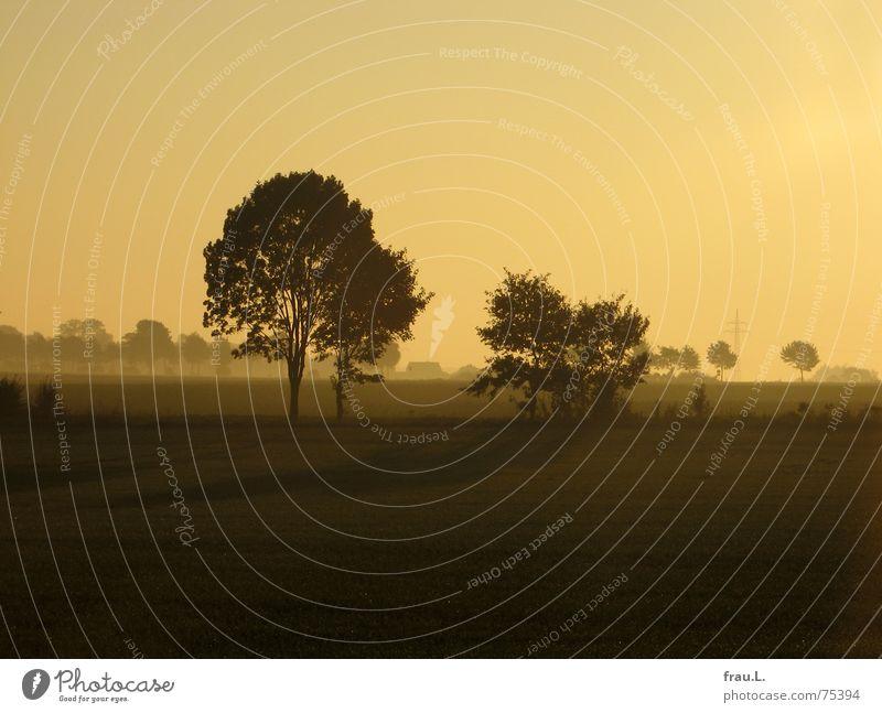 Herbstmorgen Degersen Himmel Natur Sonne Baum Landschaft Straße Wege & Pfade Horizont Feld Nebel gold Sträucher Spaziergang Dorf Himmelskörper & Weltall